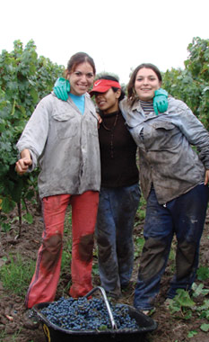 Workers in the vineyard in Argentina
