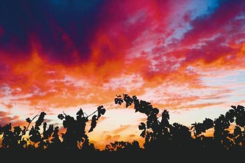 //www.andykatzphotography.com/