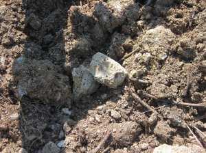 Tokaj Volcanic Soil