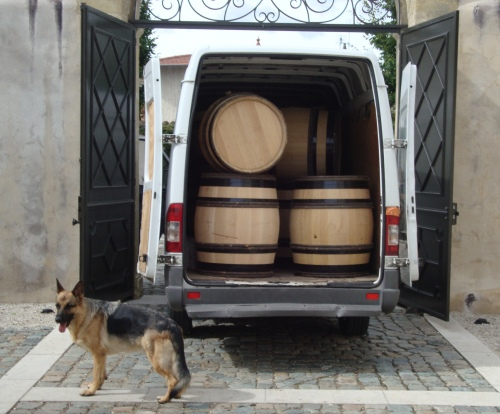 Freshly cooped Seguin Moreau barrels, guarded by Guigal's dog